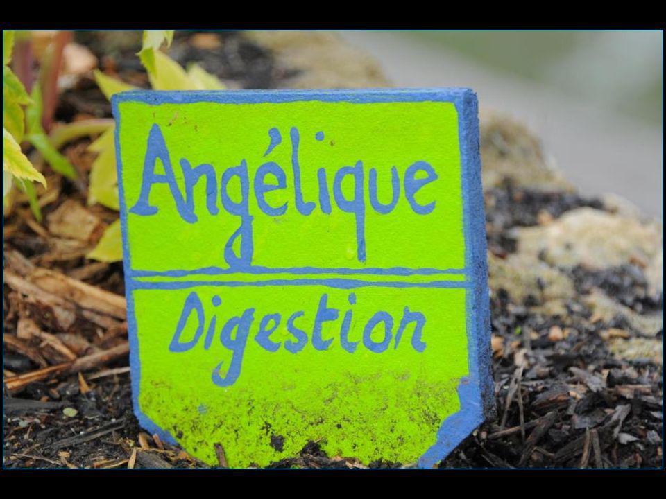 L'ensemble constitué par Les Marais Poitevin et la Baie d'Arguillon, relique du Golfe des Pictons, s'étend sur environ 100'000 hectares