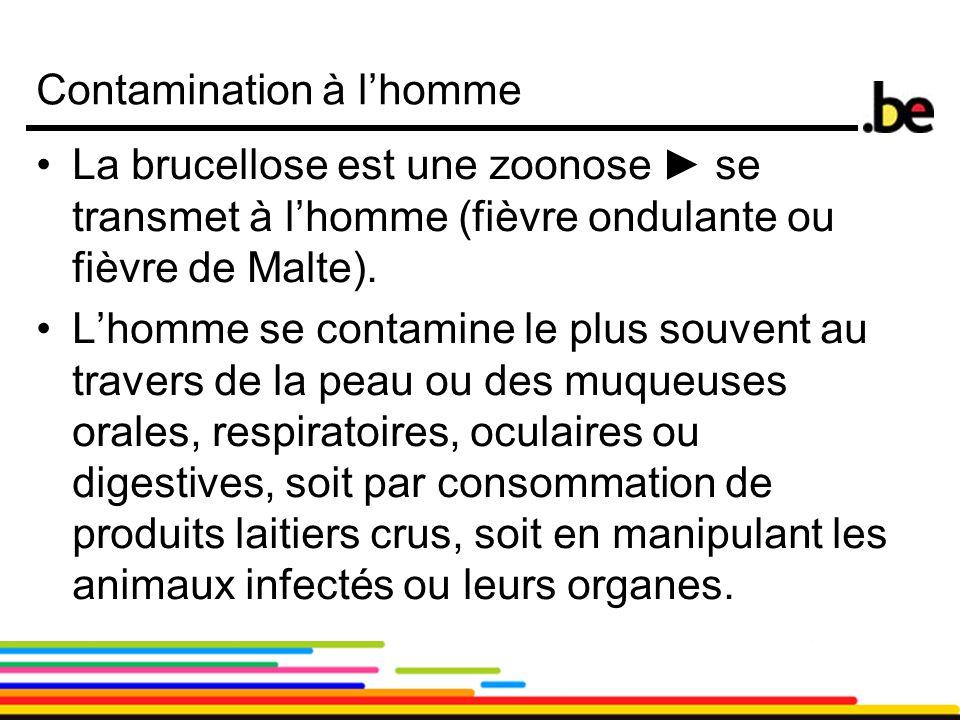 6 Contamination à l'homme La brucellose est une zoonose ► se transmet à l'homme (fièvre ondulante ou fièvre de Malte). L'homme se contamine le plus so