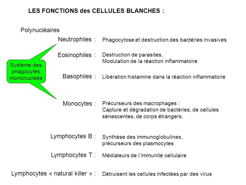 LES FONCTIONS des CELLULES BLANCHES : Polynucléaires Neutrophiles : Phagocytose et destruction des bactéries invasives Eosinophiles : Destruction de parasites, Modulation de la réaction inflammatoire Basophiles : Libération histamine dans la réaction inflammatoire Monocytes : Précurseurs des macrophages : Capture et dégradation de bactéries, de cellules sénescentes, de corps étrangers.