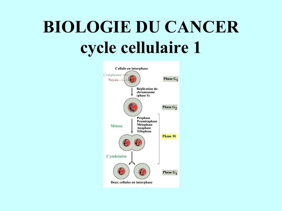 BIOLOGIE DU CANCER cycle cellulaire 1