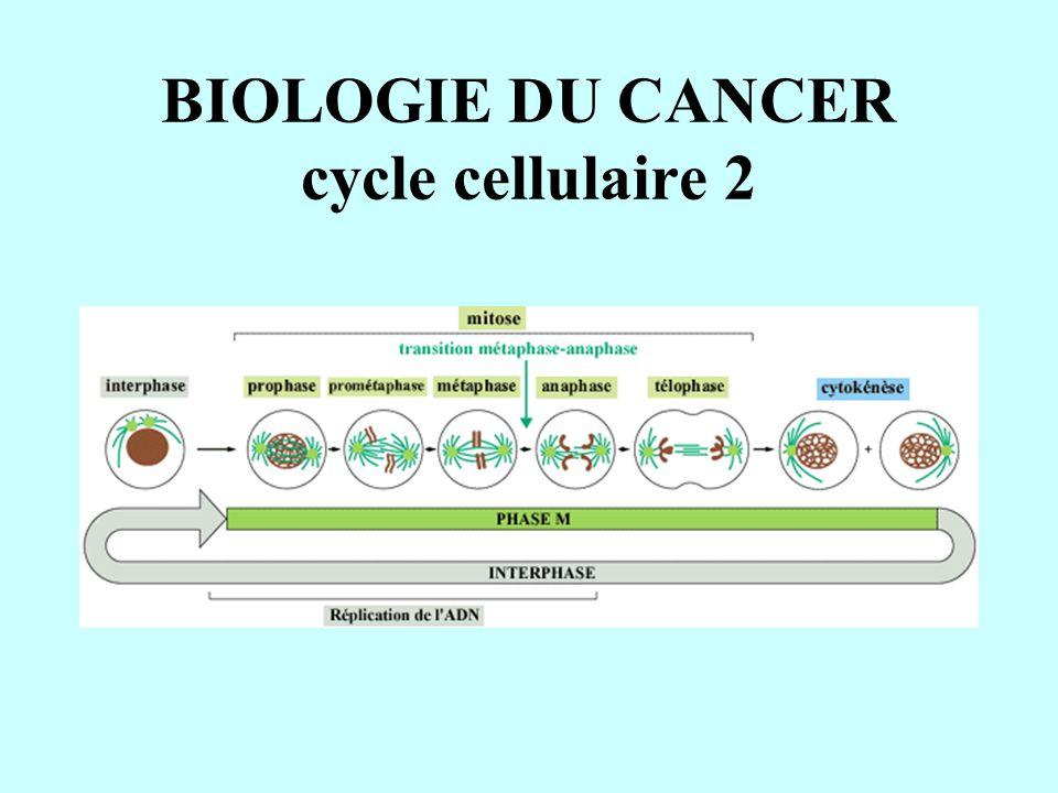 BIOLOGIE DU CANCER cycle cellulaire 2