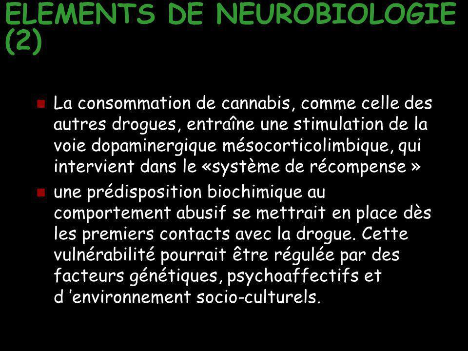 ELEMENTS DE NEUROBIOLOGIE (2) La consommation de cannabis, comme celle des autres drogues, entraîne une stimulation de la voie dopaminergique mésocort
