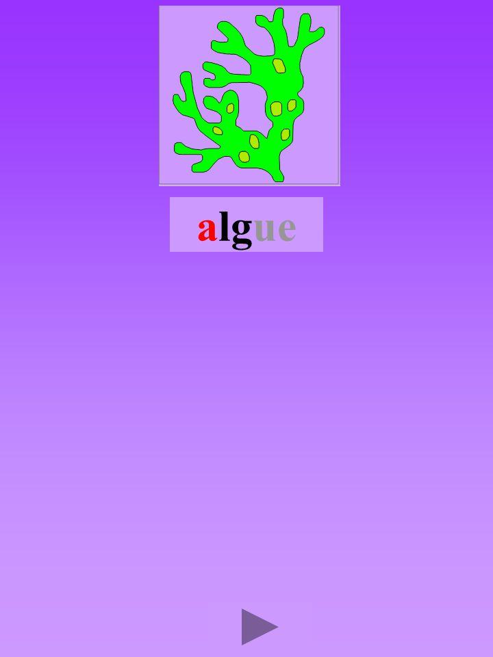 algue4 Quel son-voyelle ? a Dans quel ordre ?      Quel est la bonne syllabe ? alggalgalgla gllaglag
