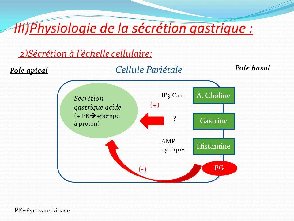 2)Sécrétion à l'échelle cellulaire: III)Physiologie de la sécrétion gastrique : Cellule Pariétale Gastrine Histamine PG Sécrétion gastrique acide (+ P