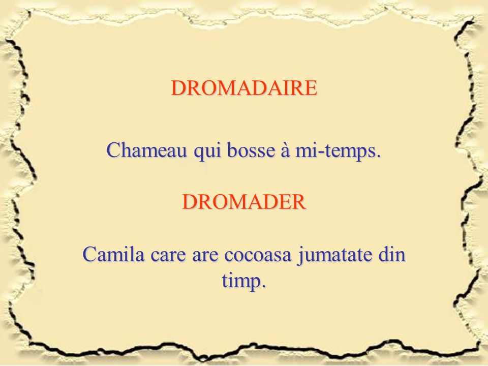 DROMADAIRE Chameau qui bosse à mi-temps. DROMADER Camila care are cocoasa jumatate din timp.