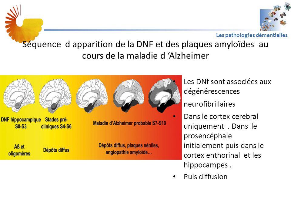A1 Les pathologies démentielles Séquence d apparition de la DNF et des plaques amyloïdes au cours de la maladie d 'Alzheimer Les DNf sont associées aux dégénérescences neurofibrillaires Dans le cortex cerebral uniquement.