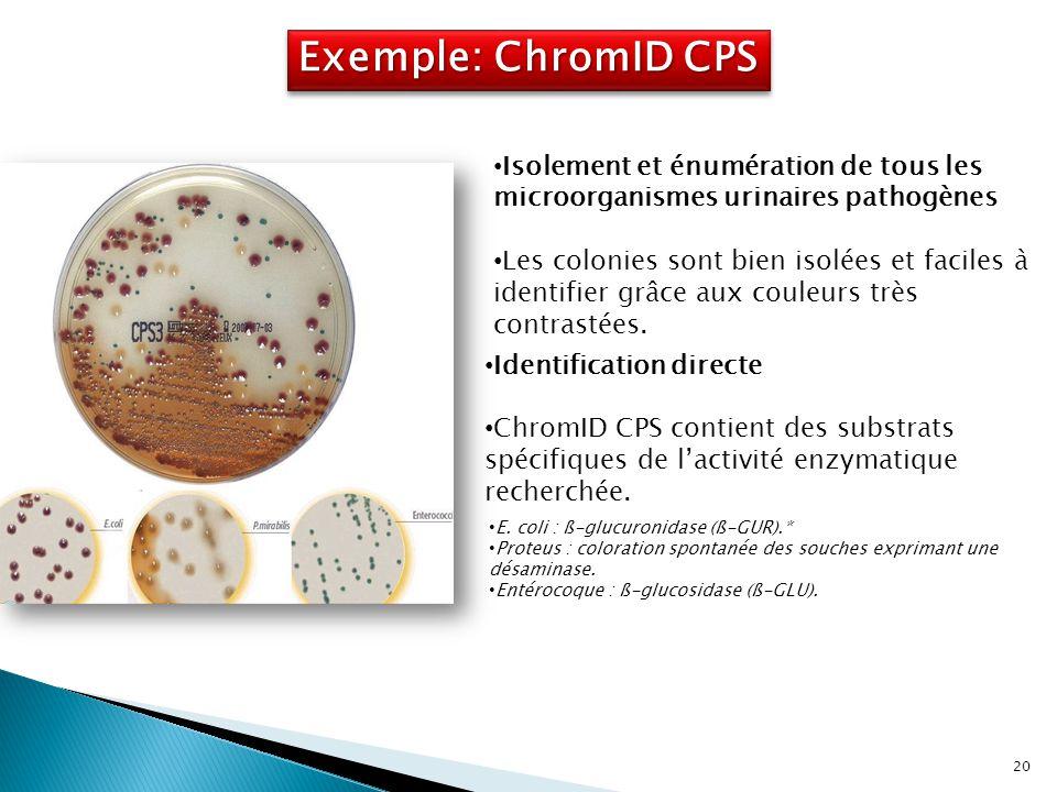 Exemple: ChromID CPS E. coli : ß-glucuronidase (ß-GUR).* Proteus : coloration spontanée des souches exprimant une désaminase. Entérocoque : ß-glucosid