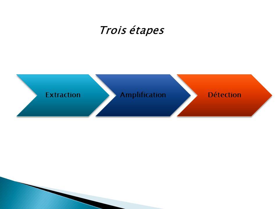 Extraction Extraction Amplification Amplification Détection Détection Trois étapes