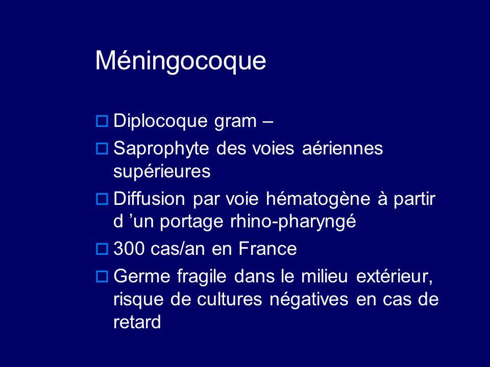 Méningocoque  Diplocoque gram –  Saprophyte des voies aériennes supérieures  Diffusion par voie hématogène à partir d 'un portage rhino-pharyngé 