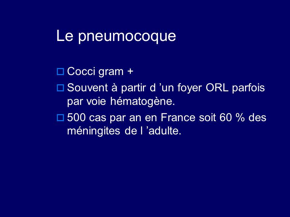 Le pneumocoque  Cocci gram +  Souvent à partir d 'un foyer ORL parfois par voie hématogène.  500 cas par an en France soit 60 % des méningites de l
