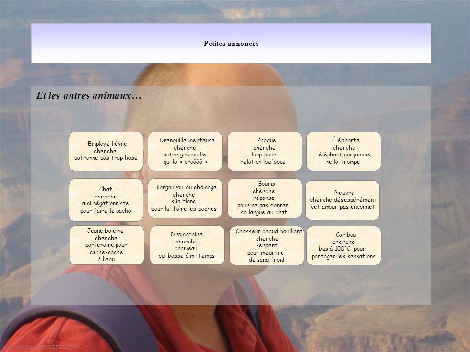Petites annonces Et les autres animaux… Copyright Philippe GOURDIN 2010 Chat cherche ami négationniste pour faire le pacha Kangourou au chômage cherch