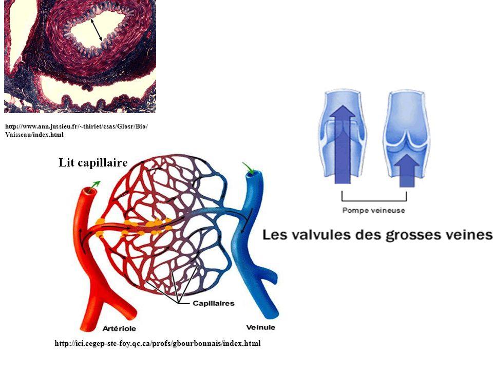 http://www.ann.jussieu.fr/~thiriet/csas/Glosr/Bio/ Vaisseau/index.html Lit capillairehttp://ici.cegep-ste-foy.qc.ca/profs/gbourbonnais/index.html