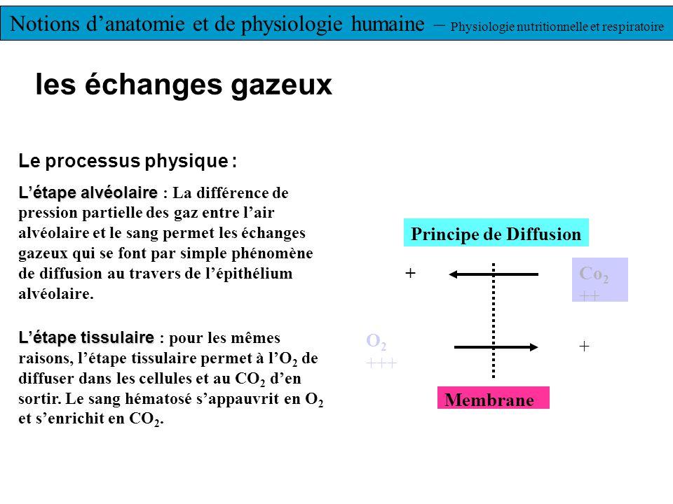 les échanges gazeux Le processus physique : L'étape alvéolaire L'étape alvéolaire : La différence de pression partielle des gaz entre l'air alvéolaire et le sang permet les échanges gazeux qui se font par simple phénomène de diffusion au travers de l'épithélium alvéolaire.