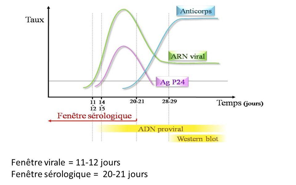 Fenêtre virale = 11-12 jours Fenêtre sérologique = 20-21 jours