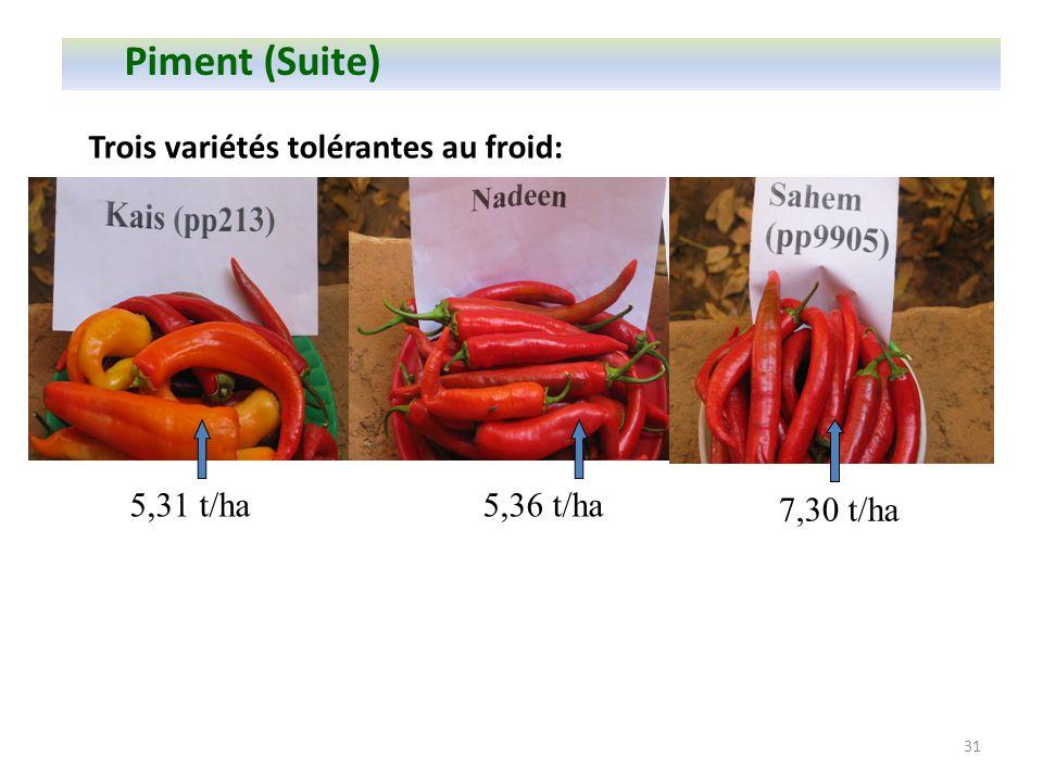 31 Trois variétés tolérantes au froid: Piment (Suite) 7,30 t/ha 5,31 t/ha5,36 t/ha