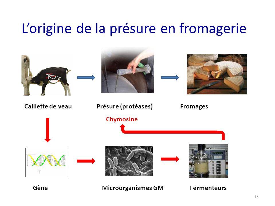 L'origine de la présure en fromagerie Caillette de veau Présure (protéases) Fromages Chymosine Gène Microorganismes GM Fermenteurs 15