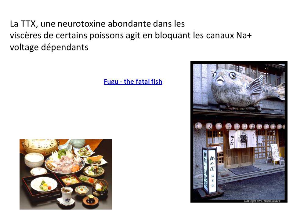 Fugu - the fatal fish La TTX, une neurotoxine abondante dans les viscères de certains poissons agit en bloquant les canaux Na+ voltage dépendants