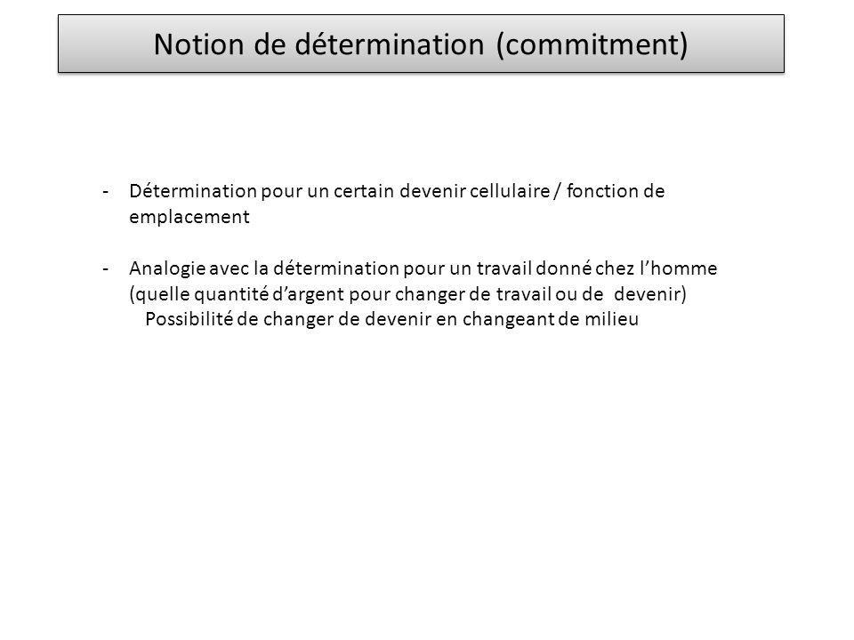 Notion de détermination (commitment) -Détermination pour un certain devenir cellulaire / fonction de emplacement -Analogie avec la détermination pour