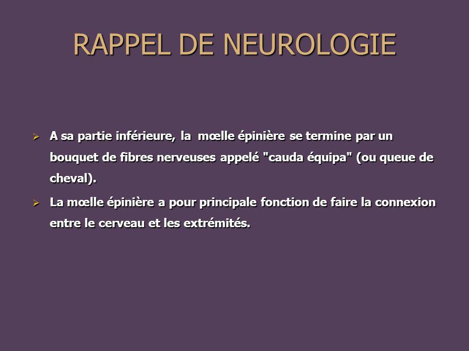 RAPPEL DE NEUROLOGIE  A sa partie inférieure, la mœlle épinière se termine par un bouquet de fibres nerveuses appelé cauda équipa (ou queue de cheval).