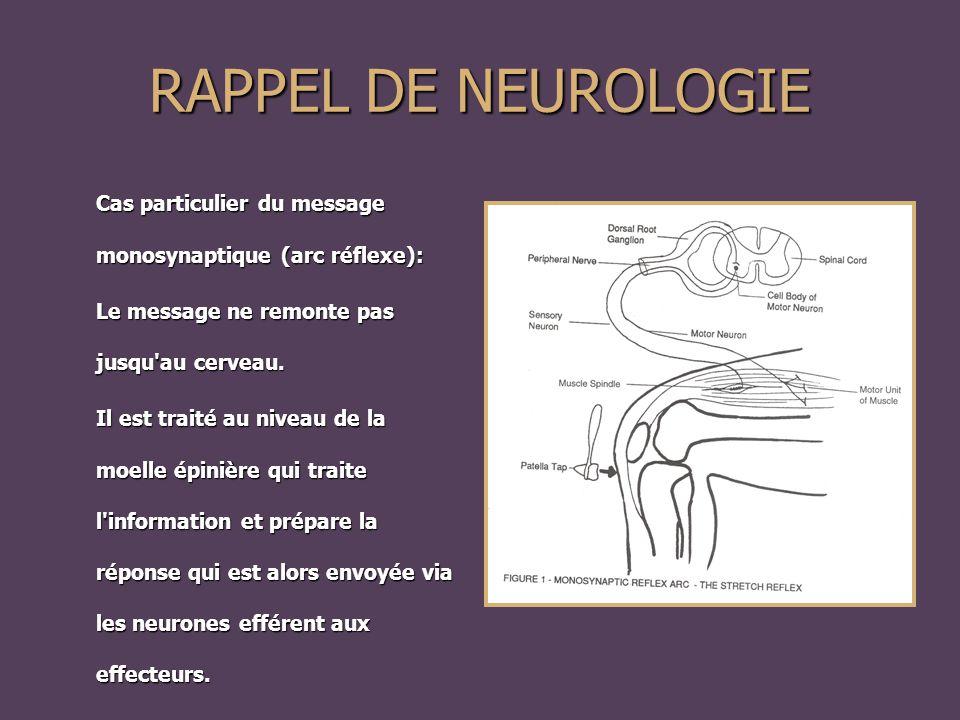 RAPPEL DE NEUROLOGIE Cas particulier du message monosynaptique (arc réflexe): Le message ne remonte pas jusqu au cerveau.