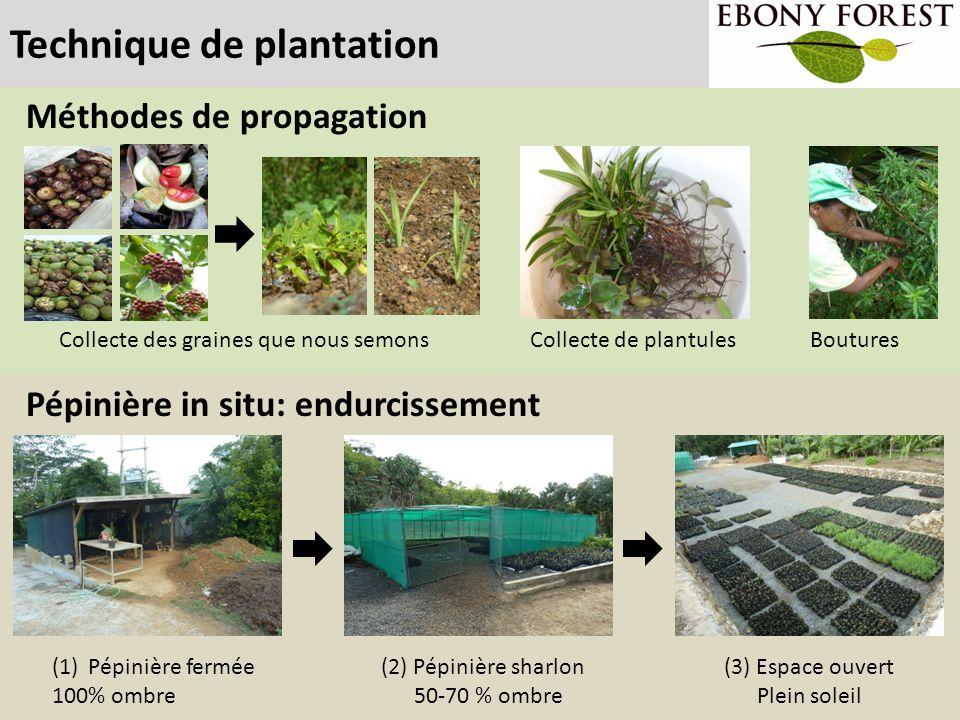 Technique de plantation Méthodes de propagation Boutures Collecte des graines que nous semons (3) Espace ouvert Plein soleil (2) Pépinière sharlon 50-