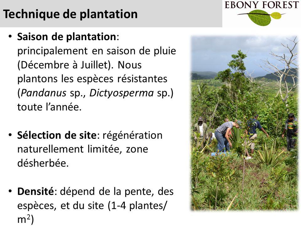 Technique de plantation Saison de plantation: principalement en saison de pluie (Décembre à Juillet). Nous plantons les espèces résistantes (Pandanus