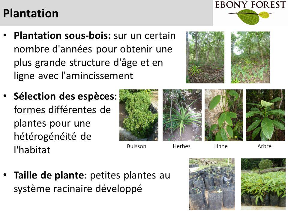 Plantation Taille de plante: petites plantes au système racinaire développé Sélection des espèces: formes différentes de plantes pour une hétérogénéit