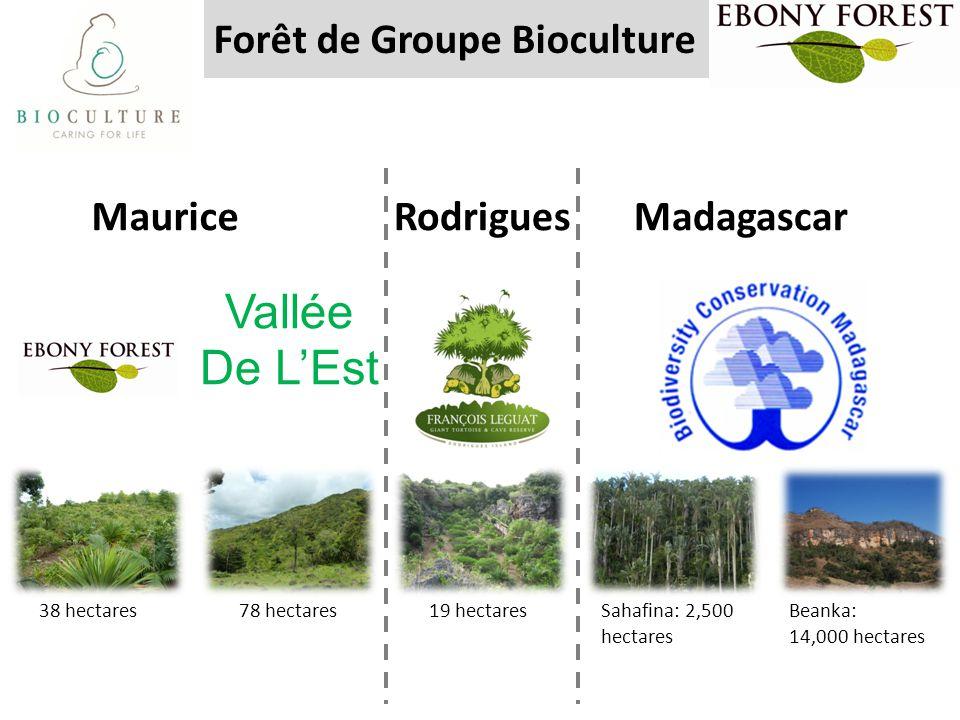 Forêt de Groupe Bioculture Vallée De L'Est 78 hectares 19 hectares Beanka: 14,000 hectares Sahafina: 2,500 hectares 38 hectares RodriguesMauriceMadaga