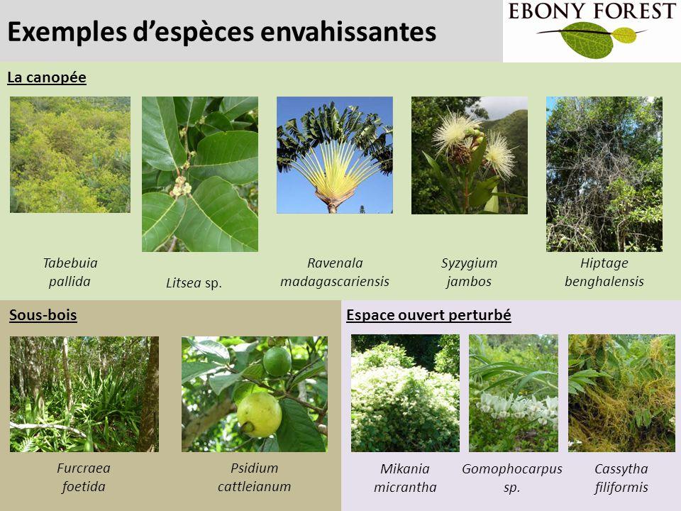 L'objectif d'Ebony Forest Convertir les 38 hectares de forêt envahie en forêt indigène et restaurer les communautés d'animaux (oiseaux, escargots, reptiles, tortues, insectes) 2005 Couverture forestière indigène 2005 High 6.9 hectares (18%) Medium 2.8 hectares (7%) Low 28.3 hectares (75%) 2013 Couverture forestière indigène 2013 High 11.9 hectares (31%) Medium 1.6 hectares (5%) Low 24.5 hectares (64%) 2007-2013 Désherbage: 14 hectares Plantation: >100,000 plantes