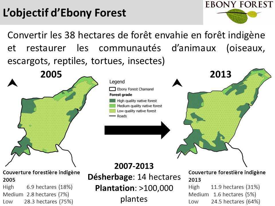 L'objectif d'Ebony Forest Convertir les 38 hectares de forêt envahie en forêt indigène et restaurer les communautés d'animaux (oiseaux, escargots, rep