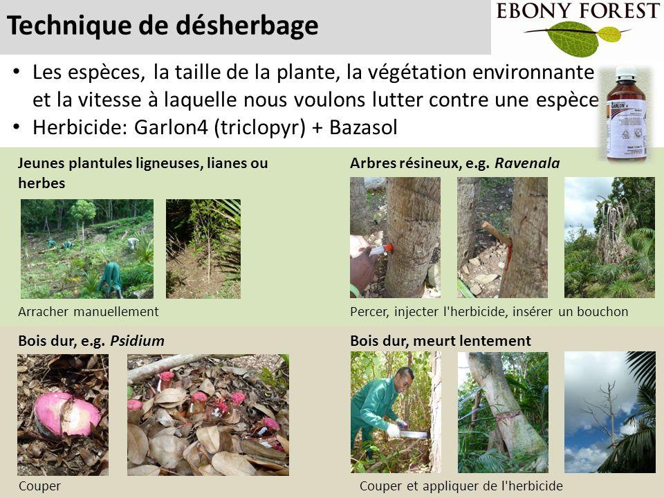Technique de désherbage Les espèces, la taille de la plante, la végétation environnante et la vitesse à laquelle nous voulons lutter contre une espèce