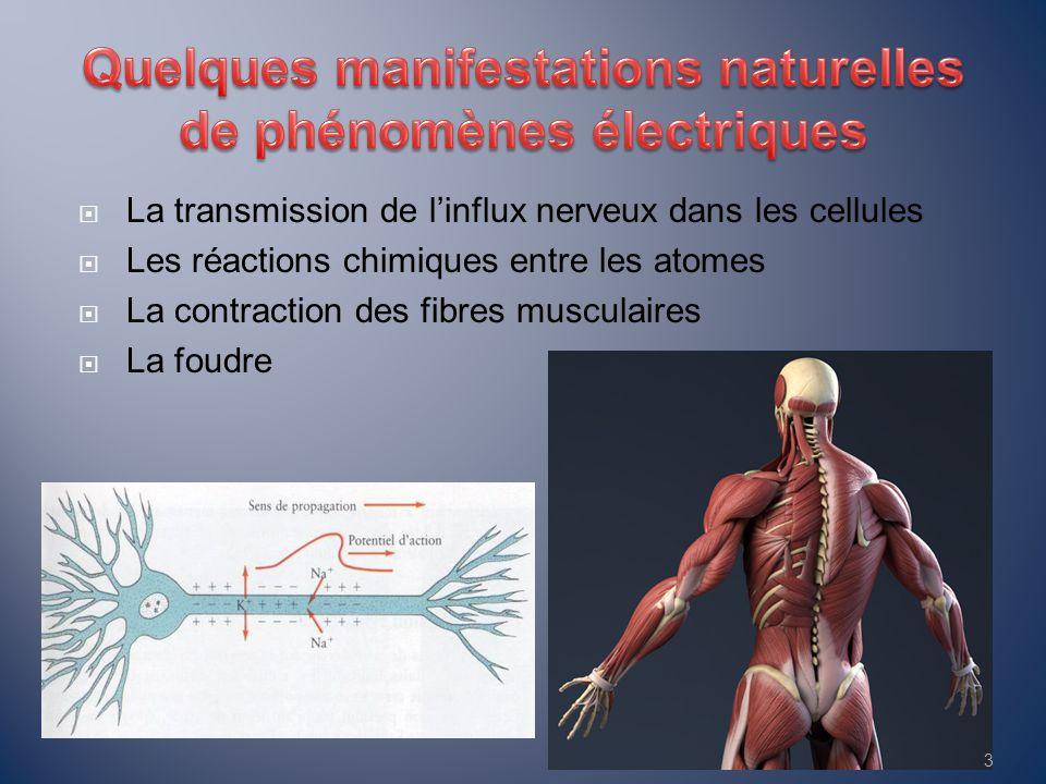  La transmission de l'influx nerveux dans les cellules  Les réactions chimiques entre les atomes  La contraction des fibres musculaires  La foudre