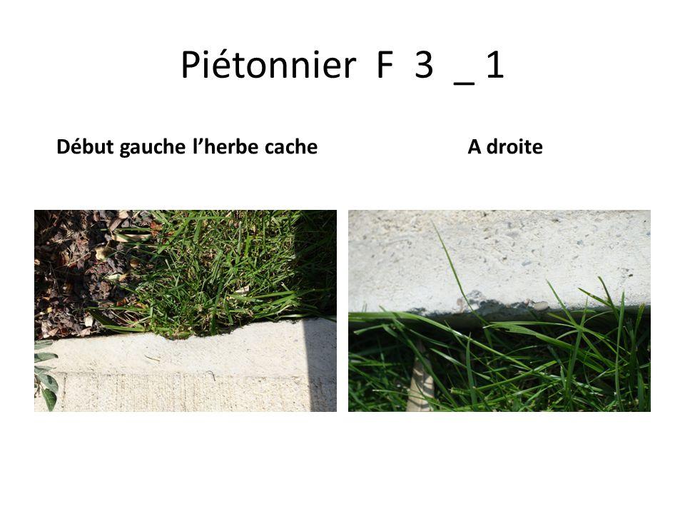 Piétonnier F 3 _ 1 Début gauche l'herbe cache A droite