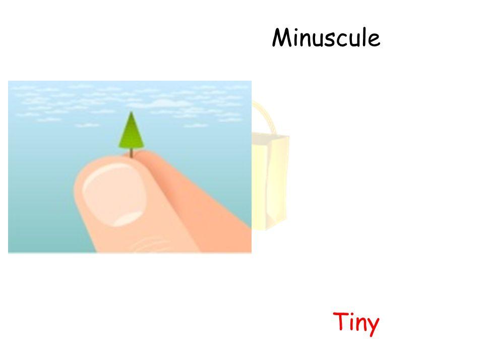 Minuscule Tiny