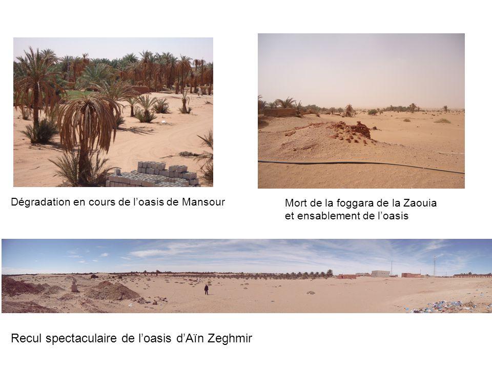 Dégradation en cours de l'oasis de Mansour Mort de la foggara de la Zaouia et ensablement de l'oasis Recul spectaculaire de l'oasis d'Aïn Zeghmir