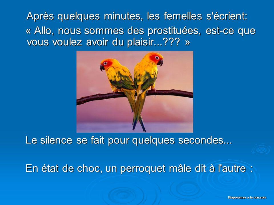 Diaporama PPS réalisé pour http://www.diaporamas-a-la-con.com Diaporamas-a-la-con.com Le lendemain, la femme apporte ses femelles perroquets chez le Curé...