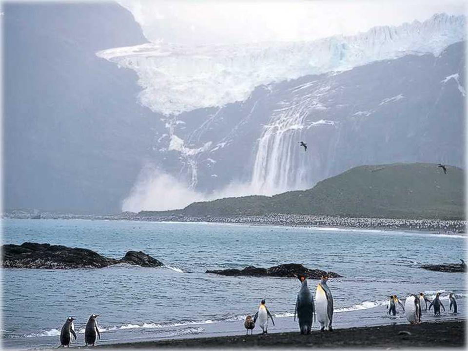 L'antartique joue le rôle d'un des réfrigérateur de la terre, régulant les courants océanniques et le climat mondial.