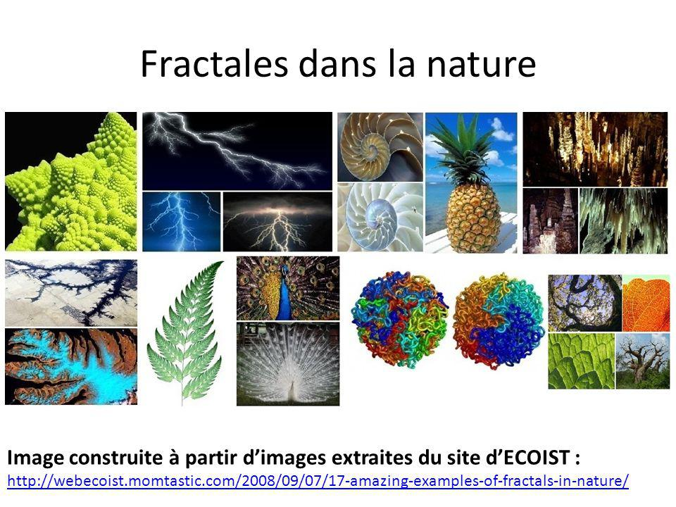Fractales dans la nature Image construite à partir d'images extraites du site d'ECOIST : http://webecoist.momtastic.com/2008/09/07/17-amazing-examples