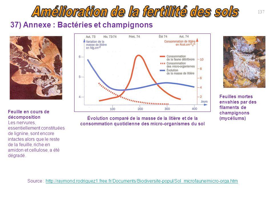 37) Annexe : Bactéries et champignons 137 Feuille en cours de décomposition Les nervures, essentiellement constituées de lignine, sont encore intactes