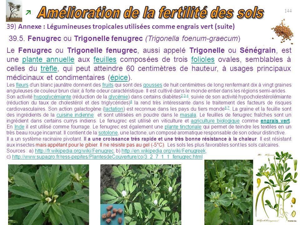 39.5. Fenugrec ou Trigonelle fenugrec (Trigonella foenum-graecum) 144 39) Annexe : Légumineuses tropicales utilisées comme engrais vert (suite) Le Fen