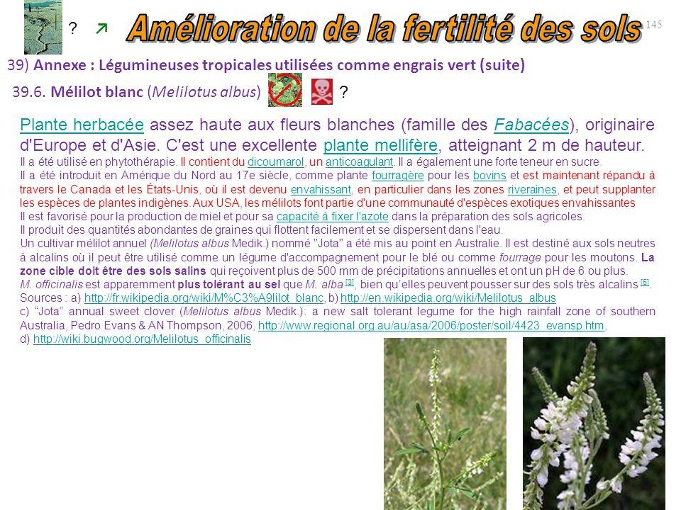 145 39) Annexe : Légumineuses tropicales utilisées comme engrais vert (suite) ↗ 39.6. Mélilot blanc (Melilotus albus) Plante herbacéePlante herbacée a