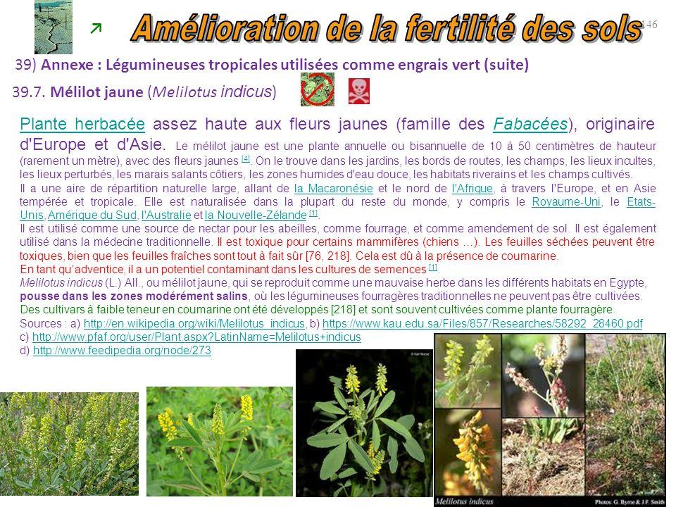 146 39) Annexe : Légumineuses tropicales utilisées comme engrais vert (suite) ↗ 39.7. Mélilot jaune (Melilotus indicus ) Plante herbacéePlante herbacé