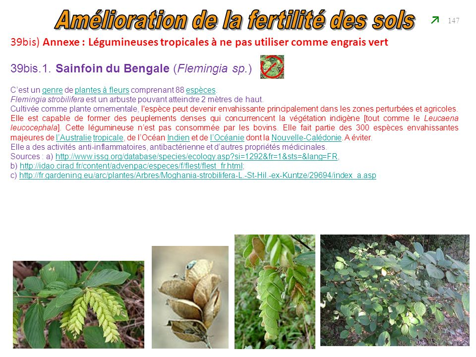 39bis) Annexe : Légumineuses tropicales à ne pas utiliser comme engrais vert 147 39bis.1. Sainfoin du Bengale (Flemingia sp.) C'est un genre de plante