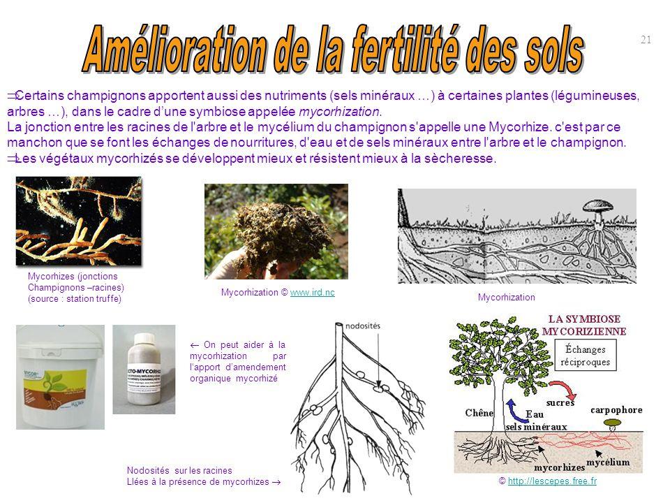 21  Certains champignons apportent aussi des nutriments (sels minéraux …) à certaines plantes (légumineuses, arbres …), dans le cadre d'une symbiose