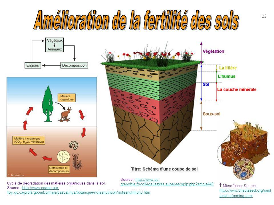 22 Cycle de dégradation des matières organiques dans le sol. Source : http://www.cegep-ste- foy.qc.ca/profs/gbourbonnais/pascal/nya/botanique/notesnut