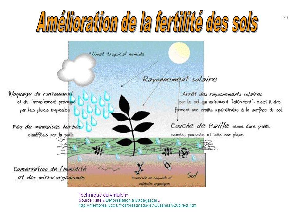 30 Technique du «mulch» Source : site « Déforestation à Madagascar ».Déforestation à Madagascar http://membres.lycos.fr/deforestmada/le%20semis%20dire
