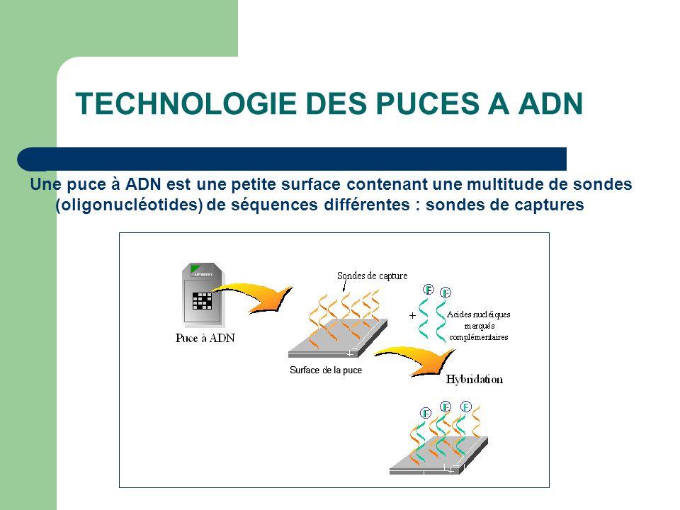 TECHNOLOGIE DES PUCES A ADN Une puce à ADN est une petite surface contenant une multitude de sondes (oligonucléotides) de séquences différentes : sond