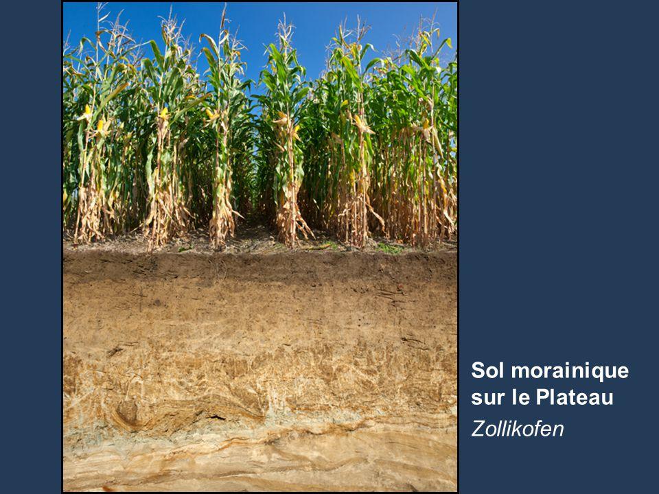 13 Name der Präsentation | Untertitel Autor Sol morainique sur le Plateau Zollikofen