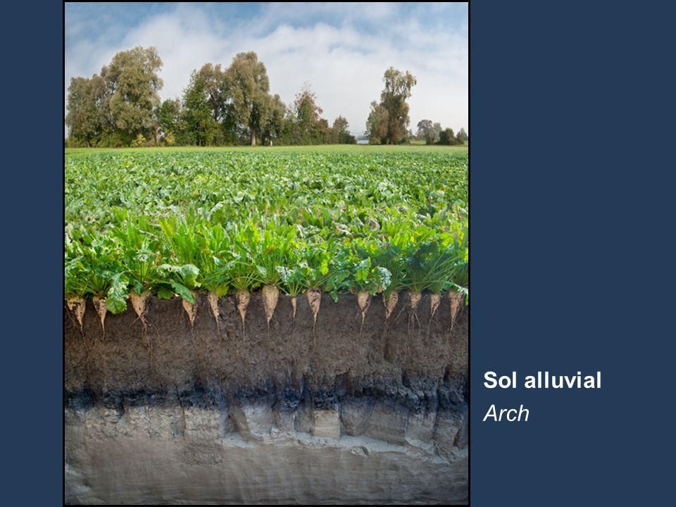 16 Name der Präsentation | Untertitel Autor Sol alluvial Arch