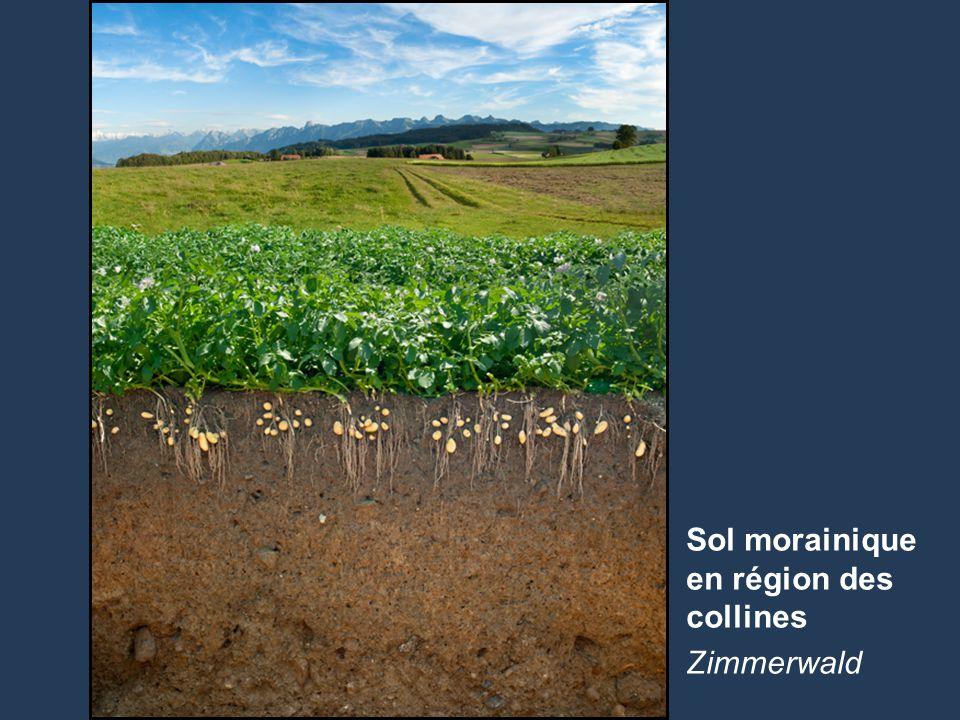 22 Name der Präsentation | Untertitel Autor Sol morainique en région des collines Zimmerwald